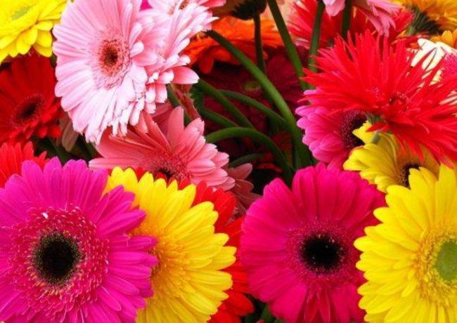 Заказать цветы с доставкой по Москве и сделать кому-то приятно